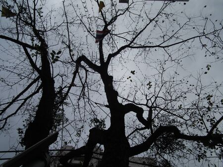 shadowed: shadowed tree 019 Stock Photo