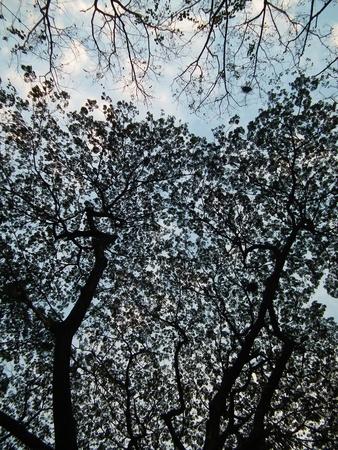 shadowed: shadowed tree 023