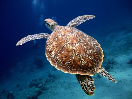 아름다운 조개와 함께 수영 거북 스톡 콘텐츠