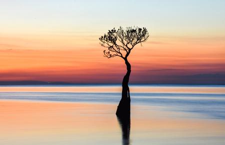 Mangrove in Walakiri Beach, after sunset, East Sumba, Indonesia Фото со стока