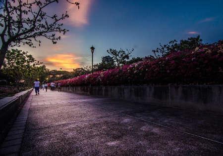 benjakitti: Benjakitti park in sunset Editorial