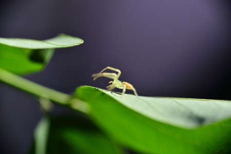 macrophoto: macrophoto of spider asinning a web