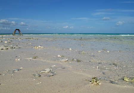 exotics: sea beach near the indian ocean