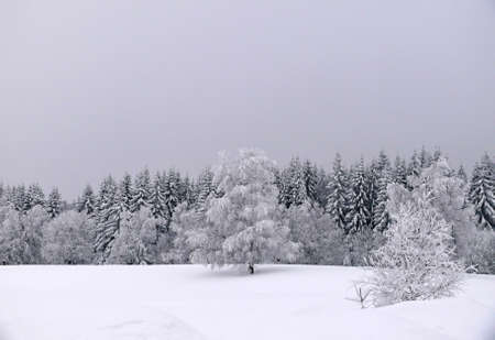 winter landscape Stock Photo - 10233141