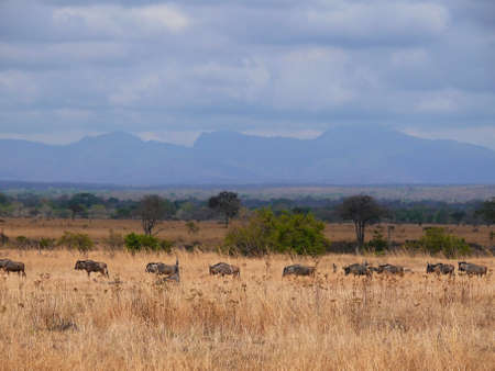 annealed: tanzania savanna pakoně vv