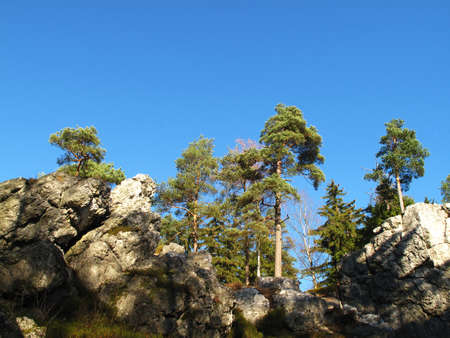 karlovy: trees on blue sky Stock Photo
