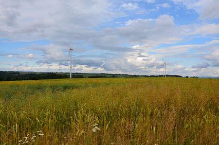 oilseed: fields of oilseed rape Stock Photo