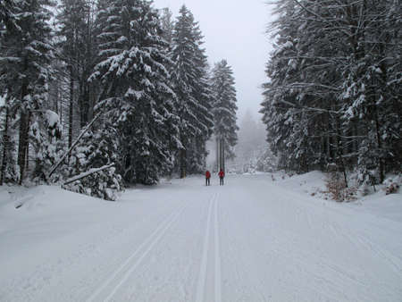 cross country skiing in the winter photo