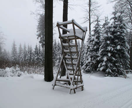 ladder in the winter woods  photo