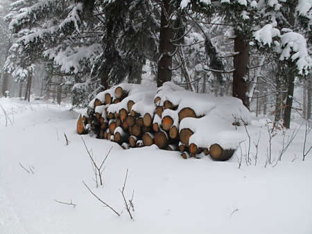 wood logs in the winter forest photo