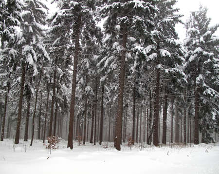 winter wooden photo