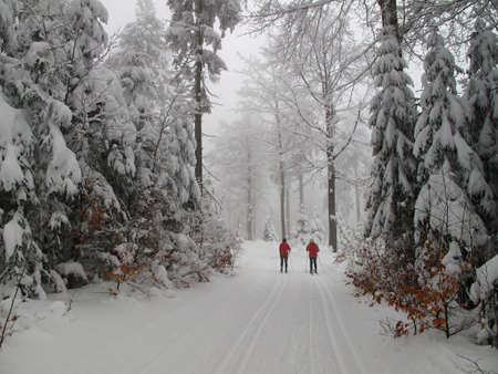cross country skiing in the winter wood photo