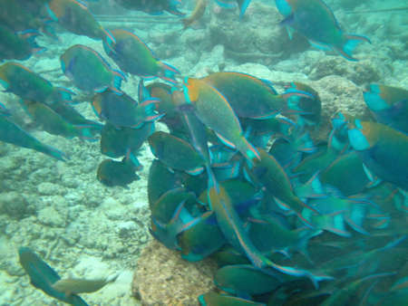 sea shoal of fish floating in the open ocean photo