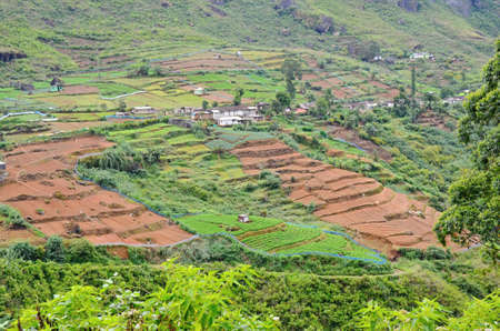 theine: Green Tea plantation and brown fields in Highland Sri Lanka