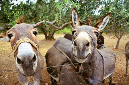 domestic animal: Donkey in a pen - domestic animal Stock Photo