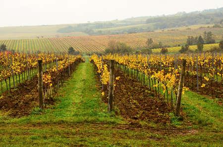 Vineyard ?obes in Moravia Czech republic Stock Photo