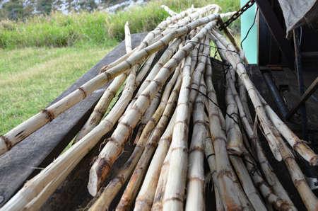 angiosperms: chopped stalks of sugar cane