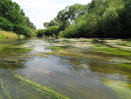 flowing river: Blooming algae in flowing river Ohre