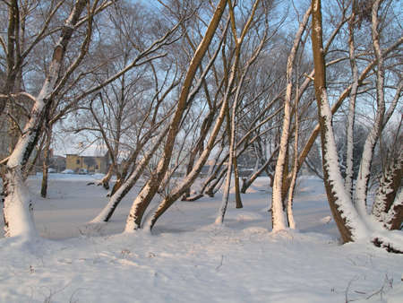 fairplay: Landscape in winter Trees covered with snow 2016