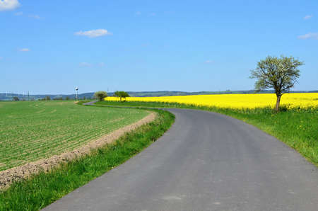karlovy: Spring landscape with rape field and trees in bloom - Landscape in Czech republic