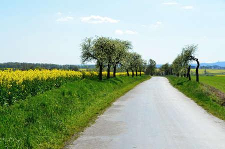 Spring landscape with rape field and trees in bloom - Landscape in Czech republic