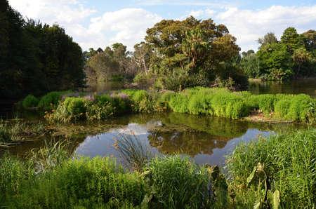 Small, garden, pond, amid botanical gardens, in Melbourne, Stock Photo