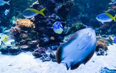 Exotische vissen Stockfoto