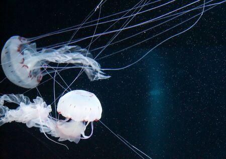 Verlichte kwallen in de zee Stockfoto
