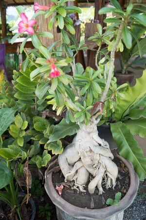 깐짜나부리에있는 식물들