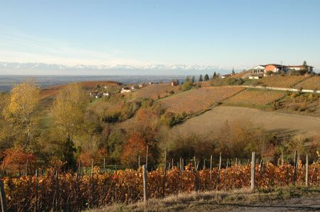 nebbiolo: Langhe is a world well known place for wine production. Red autumn vineyards.