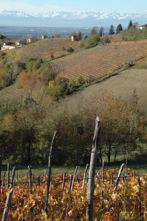 nebbiolo: Langhe is a well known place for wine production. Red autumn vineyards. Stock Photo