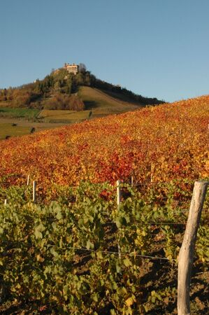 nebbiolo: Langhe is a world well known place for wine production. Red autumn vineyards with castle.