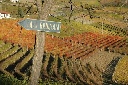 nebbiolo: Langhe is a world well known place for wine production. Red autumn vineyards with a sign