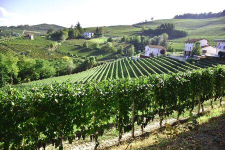 Barolo vineyards Imagens