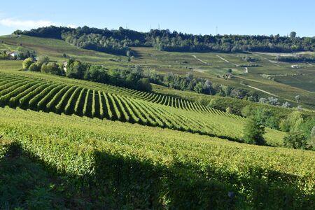 Langhe vineyards panorama