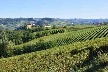 Langhe vineyards panorama; Langhe are famous for Italian wine production, in Piedmont