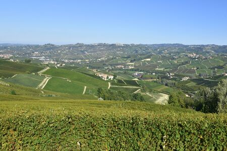 Langhe vineyards panorama; Langhe are famous for Italian wine production, in Piedmont. Imagens - 136380132