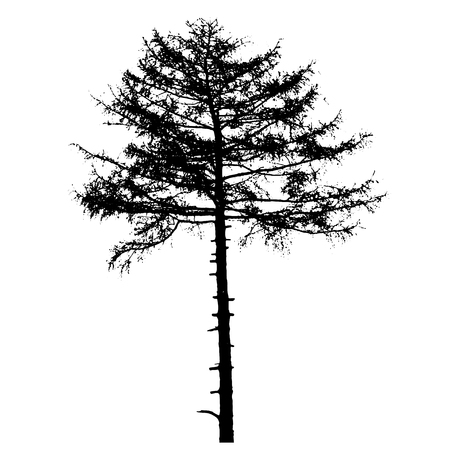 pine trees: Vector illustration of tree silhouettes. Black and white illustration.