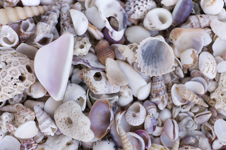 A variety of seashells. Mollusk colorful shells. Seashell texture