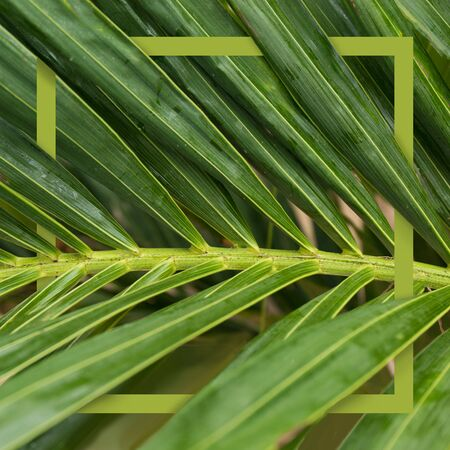 Square tropical frame. Nature green concept banner. Palm tree close up leaf. Summer holiday poster.
