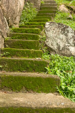 Old staircase overgrown with moss in the jungle.