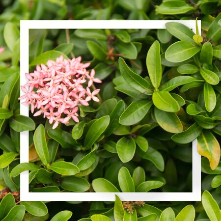 Pink flowers on green leaves background. Tropical frame
