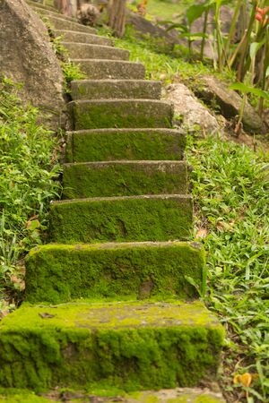 Old staircase overgrown with moss in the jungle