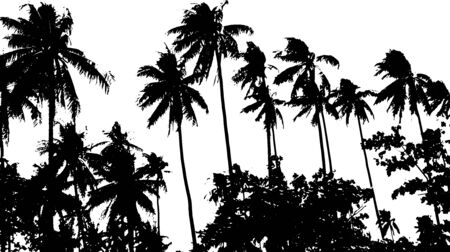 Grunge silhouette palm tree. Black and white vector illustration.