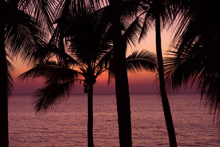 Palm trees silhouette on sunset background at the sea. Tropical evening.