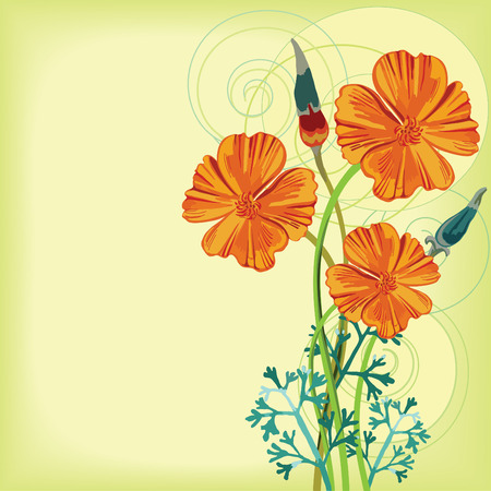 poppy flowers: Bunch of orange california poppy flowers and buds.