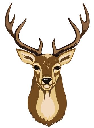 Portrait of wild deer with antlers brown color.