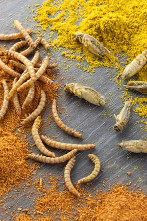 roasted and spiced edible crickets and mealworms