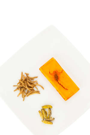 mealworm: edible insects on a plate