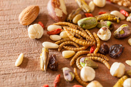 edible insects roasted mealworms, crickets snack & variety of nuts